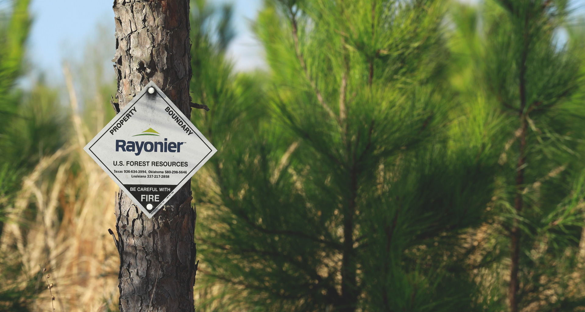 Rayonier | Forest Resources | Real Estate