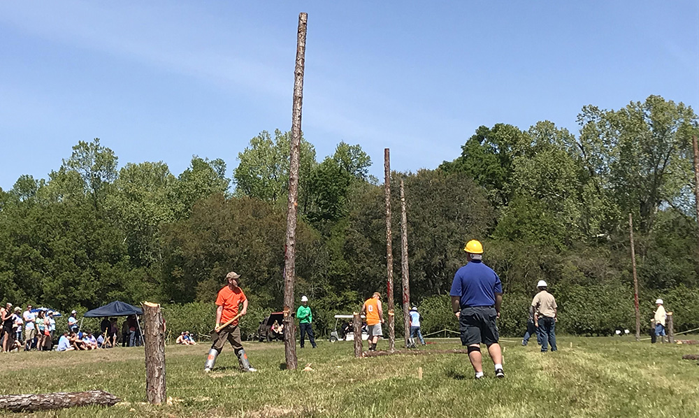 Pole Felling Southern Forestry Conclave