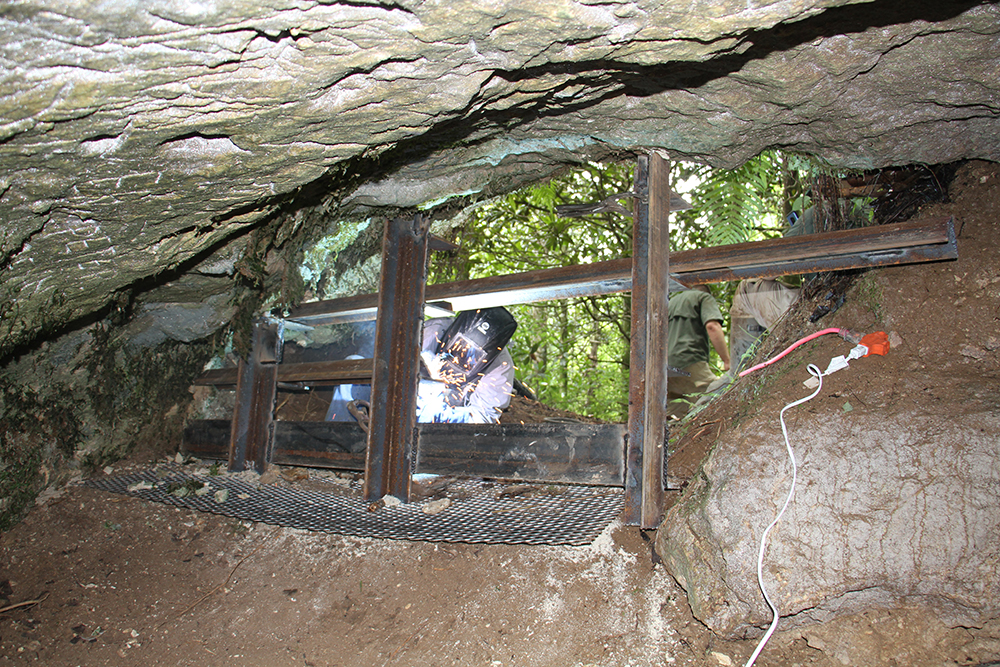 Building a protective cave for bats