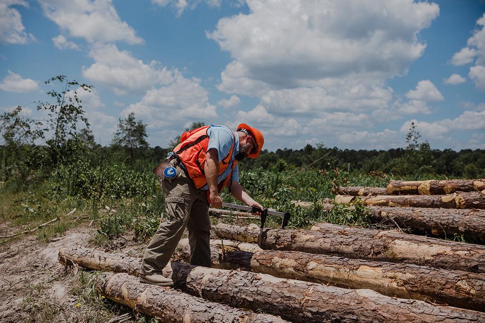 Scaling Pole Logs