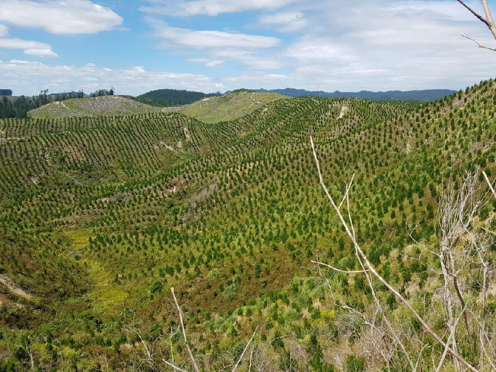 Tree seedlings grow in Bay of Plenty New Zealand