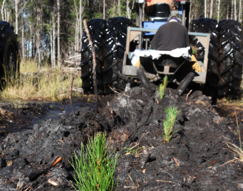 Planting pines with a tractor in Southeast