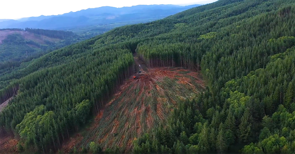 Aerial View of Winch Assisted Logging