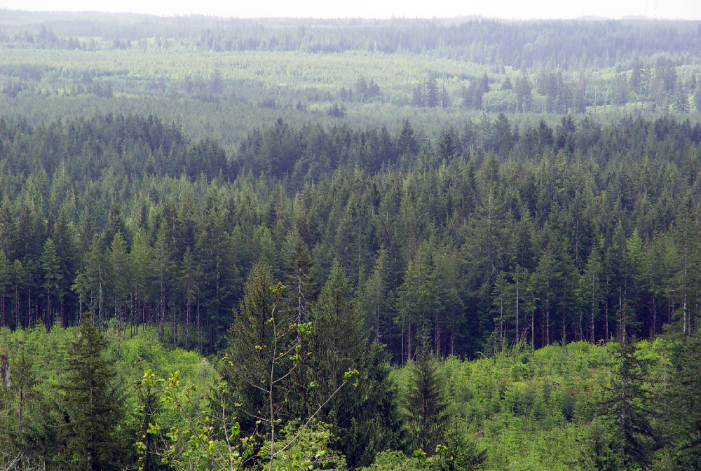 Commercial Forest for Paper Production