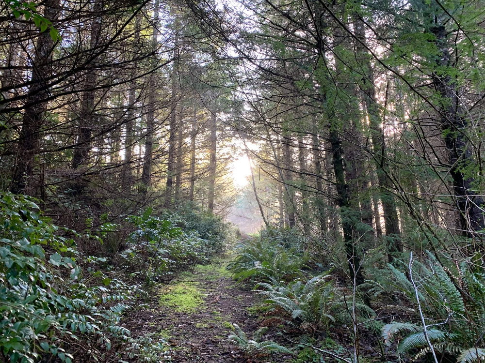 Oregon Tree Plantation