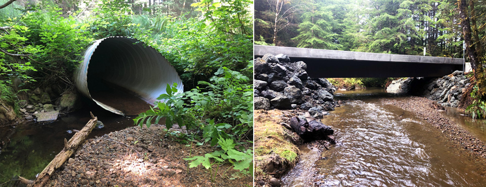 Before and After Forests & Fish Salmon Habitat Rehabilitation