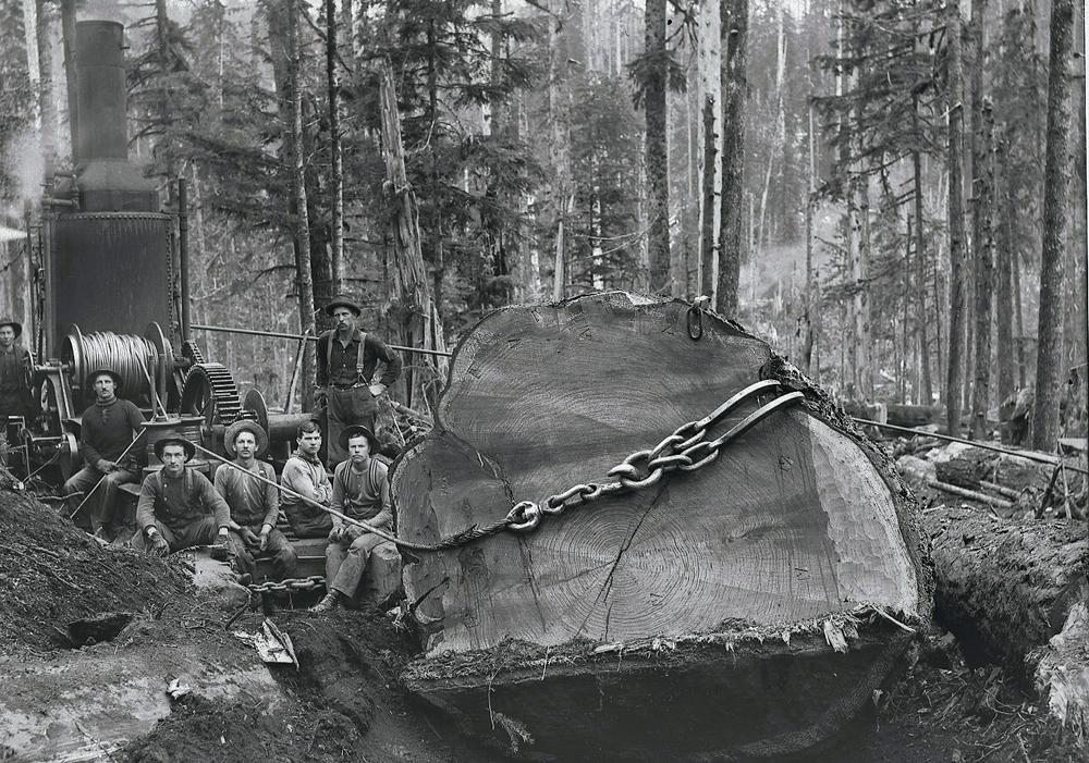 Steam Donkey Hauling Large Log