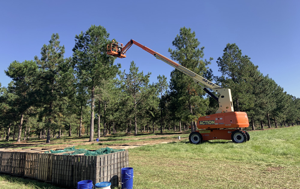 Using Lift to Collect Pinecones