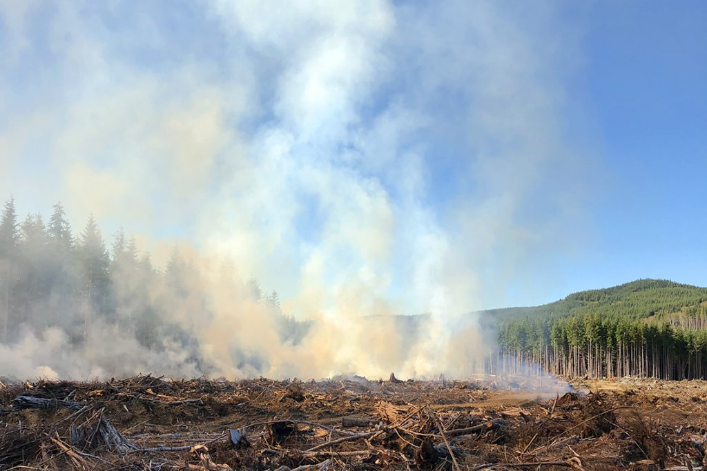 Foresters Use Broadcast Burn to Prevent Wildfire