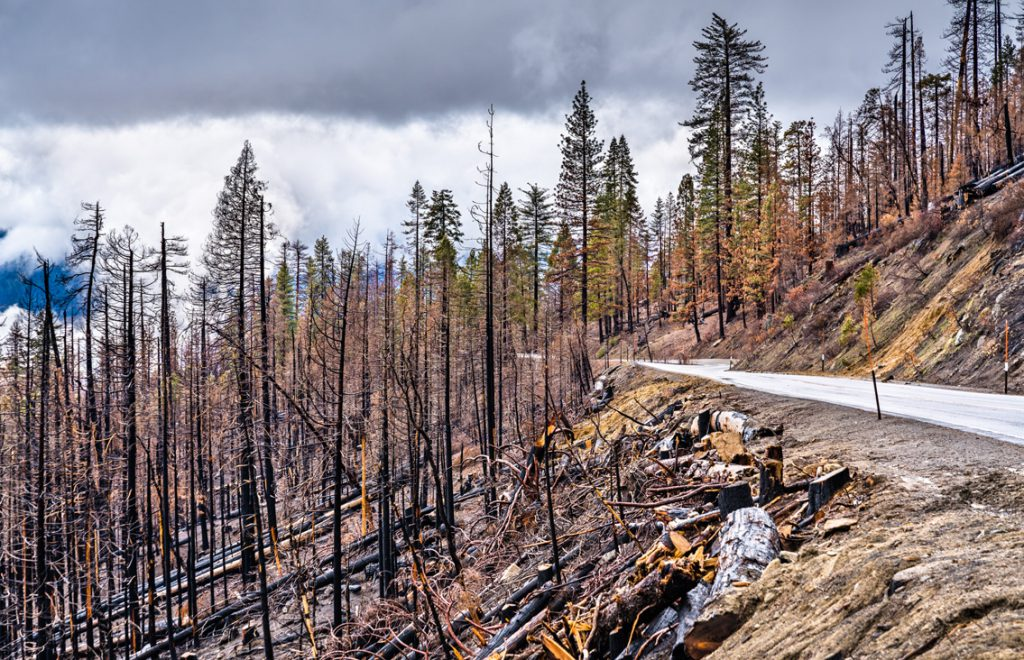 Burned Forest Land Yosemite National Park