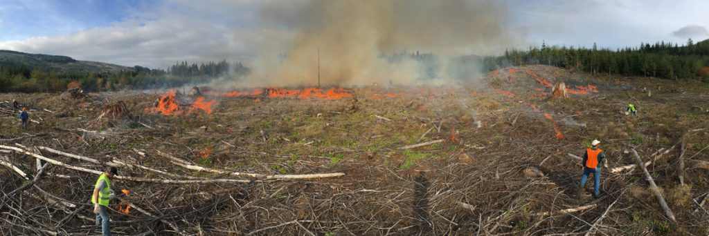 Foresters monitor controlled burn