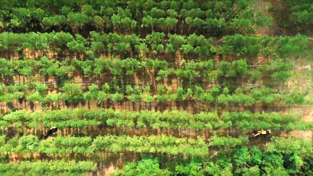 Thinning Trees Fire Prevention