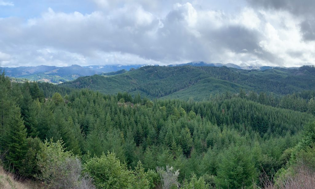 Oregon Tree Farm Forest Management