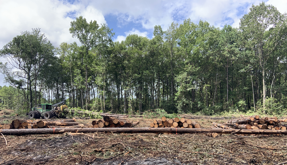 Logs from timber plantation