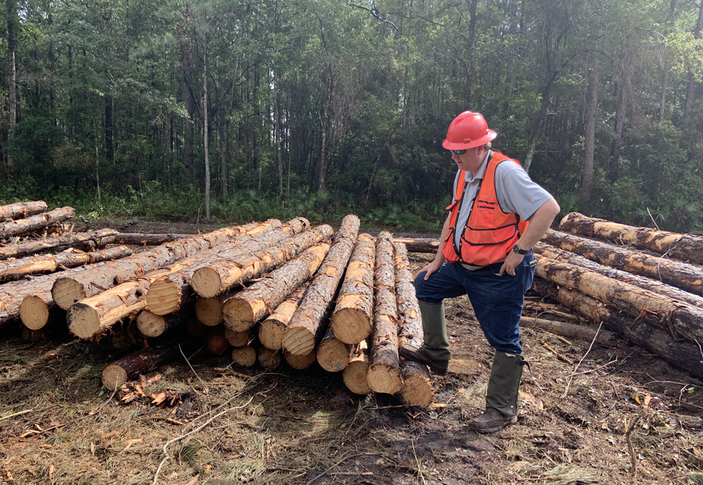 Logs for timber operation