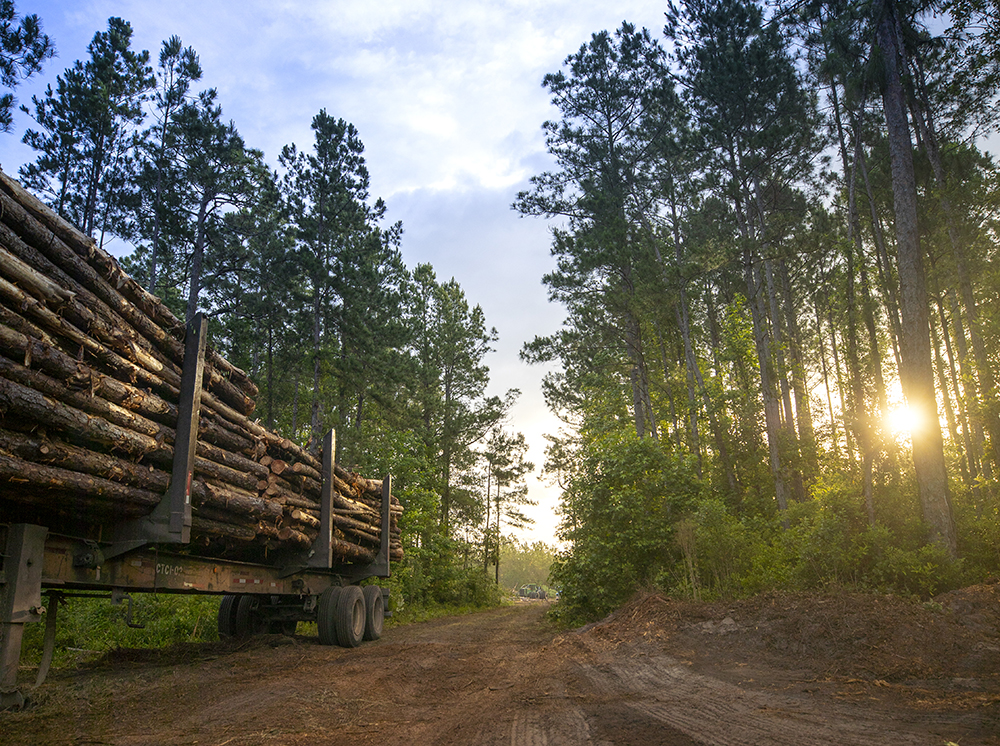 loaded log truck in the forest