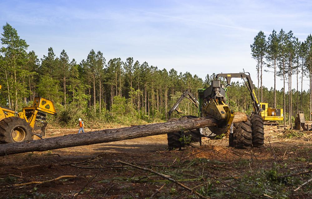 A skidder drags a large log